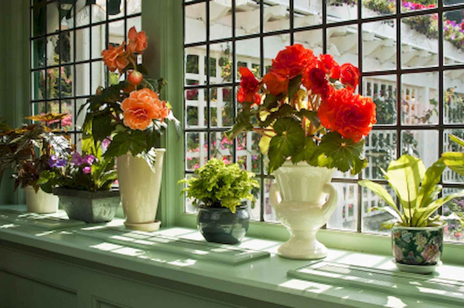 Фото цветы на бабушкиных подоконниках